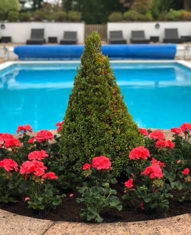 bush with swimming pool