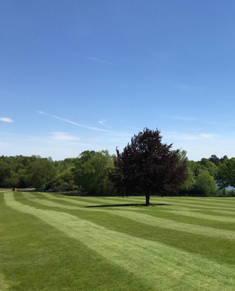 Groundtel lawn care